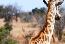 VOYAGE ║ Afrique du sud.