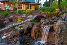 Pools, Spas, Ponds & Water Features / Waterfalls, ponds, koi ponds, water features, pools, spas - / by Paradise Restored