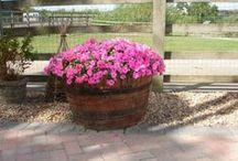 ** Wine Barrel Planters ** / Growing plants in #wine #barrels is an easy and low-maintenance #gardening method.
