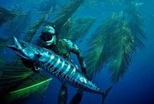 Spearfishing - South Africa