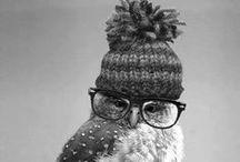 Owl, owl things <3 *-*