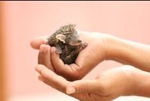 Wildlife SOS Rescues / We have a dedicated helpline +91-9871963535 to help with rescuing animals in distress