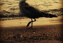 Weeding & more / Birds