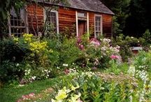 Garden of my dreams / Inspiration for my garden of earthly delights!