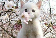 gatitos / Adorable gatitos  ,fantásticas companias