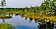 ESTONIA GUIDE / Travel inspiration Estonia
