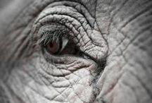 Animals / by Gemare Falzarano