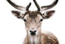 oh dear deer..