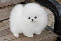 Wish I Had a Puppy...
