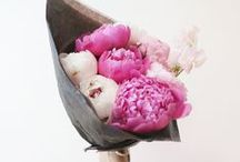 Beautiful Flowers / by Cynthia Sanchez {Oh So Pinteresting: Pinterest Consultant and Speaker}