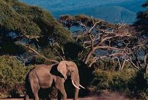 Tanzania - A true wilderness / Tanzania is a true wilderness. Over a quarter of this magnificent country is dedicated to incredibly wild and beautiful national parks and reserves – it is East Africa at its best. Tanzania is a land of superlatives: the deepest, the highest, the largest, and the oldest.