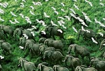 """Uganda - The pearl of Africa / Uganda – """"The Pearl of Africa"""" – is one of East Africa's better kept secrets. It has long been a favourite haunt for back-packers. Uganda has it all: remote wilderness areas, breathtaking scenery, extraordinary cultural diversity and incredible wildlife."""
