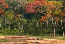 Central African Republic - A forested treasure / The Central African Republic (CAR) is a country with staggering rare natural beauty and some of the world's most amazing wildlife. It's one of the best places in Africa for encounters with forest elephant and lowland gorillas.