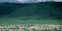 """Ngorongoro Crater - Tanzania / Tanzania is a land of superlatives: the deepest, the highest, the largest, and the oldest. Tarangire, Manyara, Ngorongoro, Serengeti and Loliondo – which make up the famed """"Northern Circuit"""" – tempt you with a million-strong Wildebeest migration, a huge volcanic caldera, a flamingo-rimmed lake, rhino, buffalo, black-maned tree-climbing lions and elephant bathing in rivers. Experience the Ngorongoro Crater, a unique ecosystem isolated from the rolling savannahs that surround it."""