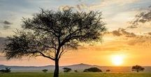 Africa General / The Beautiful World of Africa - A Continent full of bio-diversity, beautiful landscapes, wonderful cultures and incredible African wildlife. The variety is awe-inspiring.