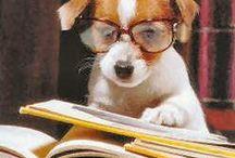 Bücherhunde