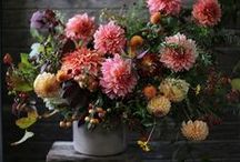 Flowers & design / by Stacy Miller