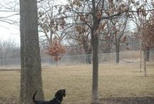 Urbana Dog Park / The Dog Park is on east Perkins Road in Urbana. Pay the daily admission fee or join for a calendar year. http://www.urbanaparks.org/parks/dog-park-perkins-rd-site/