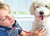 Interesting Pet Articles! / Informative articles that are relevant to any pet owner