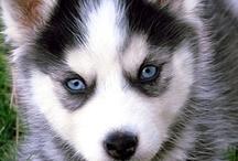 chiens / by veronique