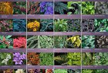 FOR MY GARDEN / Plants  & Flowers