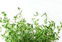 herbs . spices / by bojana babič