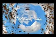 ♫ ♬♪♩♭♪ video musicali ♫ ♬♪♩♭♪ / musica