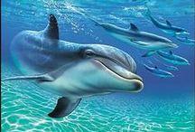 Dolphin love / by Garnet Aquarius