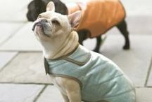 Pets Living + Fashion / Pets living and fashion inspiration