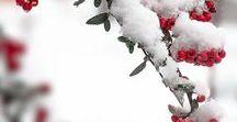 Wonderfull winter