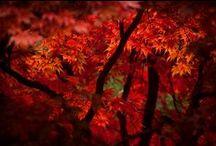 Autumn**