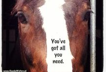Quotes & Horses / Quotes for riders.