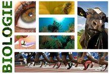 Biologie / Alles wat je wilt weten over je huiswerk voor biologie