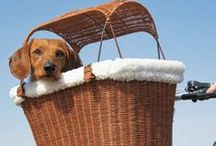 Pedaleando: viajar con mi perro