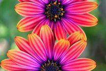 Flower n Tree
