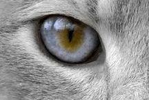 Meowmers