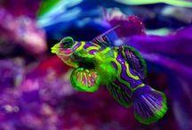 Gorgeous Fish!