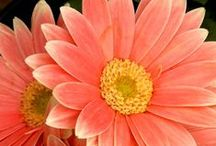 Colour it Coral