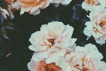 Botanical / flowers // florals // plants // blooms // buds // botanical // greenery
