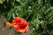 GezenAdam's Flora