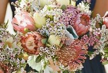 Wedding Bouquets / Browse wedding bouquet ideas & inspiratoin for you bridal bouquet. From white wedding bouquets to wildflower bouquets, from roses and peonies, to ranunculus and anemones, you'll be sure to find many ideas you'll love. Visit WeddingForward.com for more inspiration & florist advice.