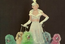 Oodles of Poodles a Girls best friend! / by Sandy Wilson