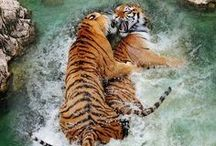 All Gods creatures...Wildlife at its best! / by Sandy Wilson