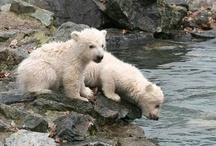 Bears................ dangerous but also cute !!!
