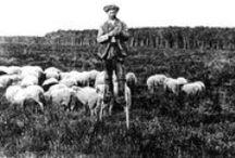 Pastori - Shepherds and Herders