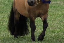 Miniature pony.