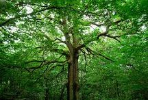 Doğa Biz