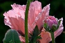bloemen en planten / alles wat groeit en bloeit