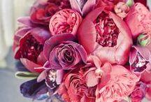 Cranberry Colour Palette