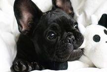 Just...Puppies